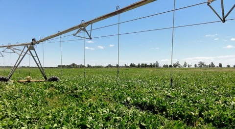 cierre trasvase Tajo-Segura afecta 24.000 hectáreas regadíos Levante almeriense