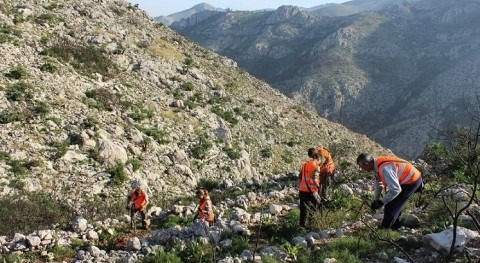 Hidraqua reforesta 8 hectáreas bosque zona afectada Pego incendio mayo 2015
