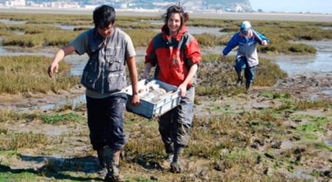 Restauración marismas, eficaz contrarrestar efectos aumento nivel mar