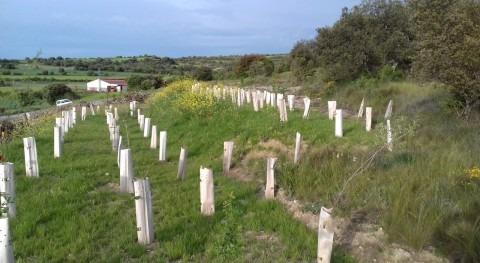 URA restaura suelos Artaza-Foronda sedimentos y madera actuaciones restauración