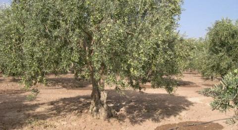 investigación evaluará rentabilidad riego agricultura cambio climático