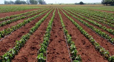 Sistema y práctica riego, ¿cómo influyen rendimiento económico cultivo?