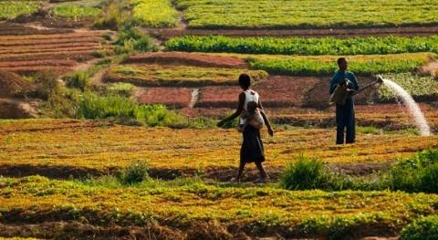 ¿Cómo medir productividad agua agricultura?