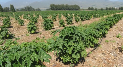 Chile anuncia que ya están disponibles bases concurso tecnificación riego