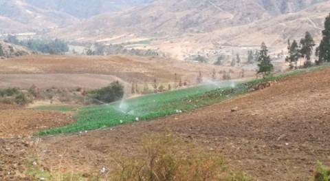 249 familias agricultoras Totora incrementan producción nuevo sistema riego