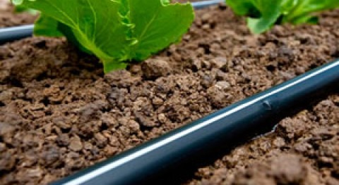 Encuentro sectorial innovación riego agrícola. Como responder nuevos intereses demanda