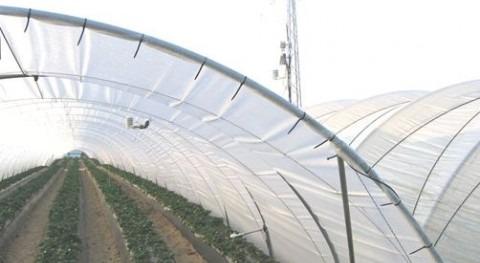 Plan Fresa no dará solución problemas uso suelo y agua Doñana, WWF