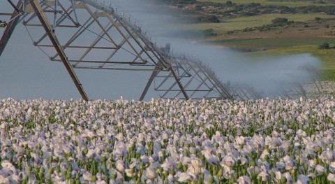 WWF, Plan Especial Ordenación Regadío Corona Norte Doñana crea falsas expectativas