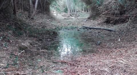 Retirada vegetación, árboles caídos y residuos riera Rifredi Calonge