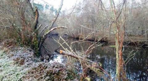 Confederación Miño-Sil inicia trabajos mejora márgenes río Arnoia