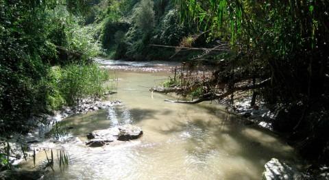 Detectados elevados niveles retardantes llama peces río