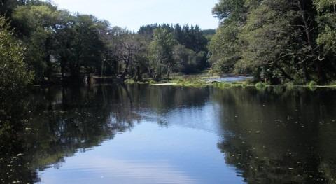 CH Miño-Sil inicia trabajos limpieza y retirada árboles río Miño Lugo
