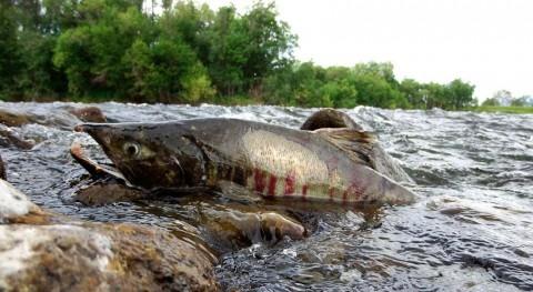 WWF pide Gobiernos europeos mayor ambición demoler presas y liberar ríos