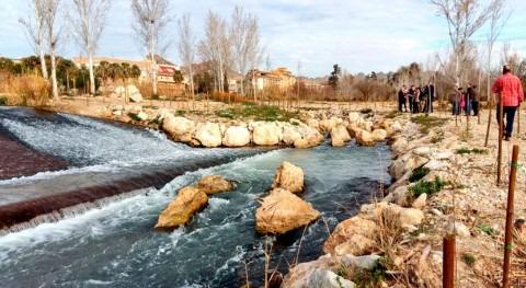 CHS elimina cañas y restaura bosque ribera Vega Alta río Segura