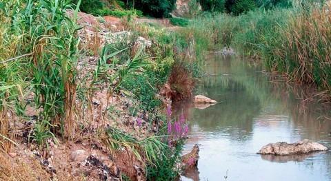 Confederación Júcar refuerza restauración vegetación ribera