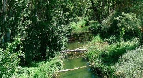 Tajuña es río madrileño mayor concentración nitratos, asociaciones ecologistas