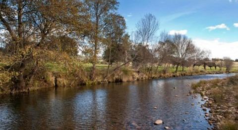 Se inicia licitación aprovechamiento camalote extraído río Guadiana