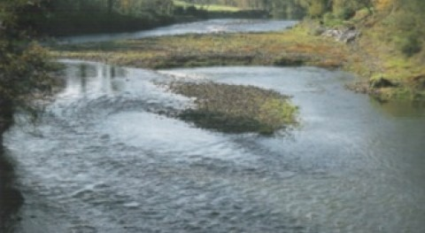 Foro Asturias denuncia Fiscalía mortandad salmones río Pas