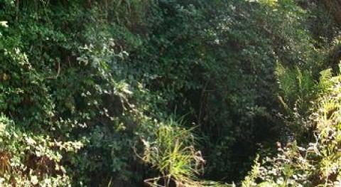 Xunta Galicia comienza obras limpieza río Sandián