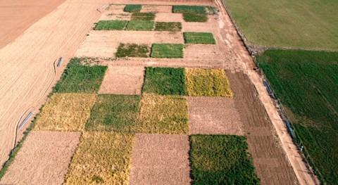 cultivos cubierta mejoran sostenibilidad regadío frente al barbecho