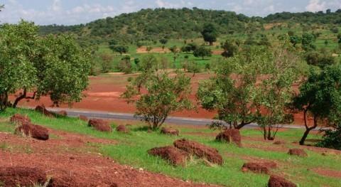 agricultores Sahel se enfrentan sequía nuevas técnicas cultivo