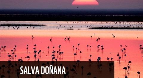 WWF lanza campaña internacional detener asedio Doñana