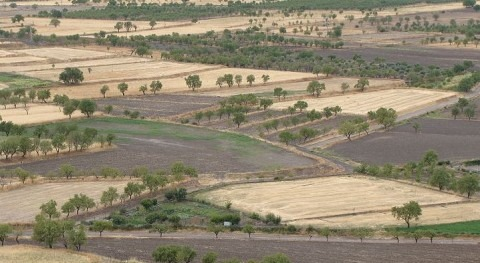 crecida Ebro echa aperder 80% cultivo verdura y hortaliza Ribera