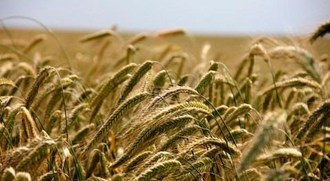 Agricultura y seguridad alimentaria, ejes centrales lucha cambio climático