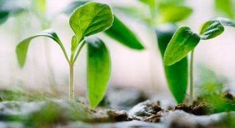 Fundación Aquae recibe Sello Registro Huella Carbono 2016