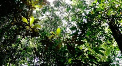 Amazonia se expone severas sequías provocadas cambio climático