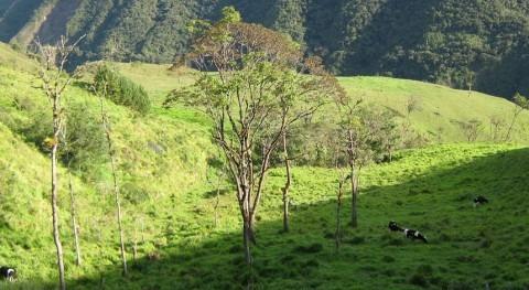 Volver cultivar tierra proteger selva tropical: ¿ contradicción?