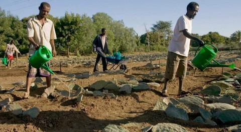 distribución tiempo semillas Etiopía fortalece resiliencia al impacto Niño