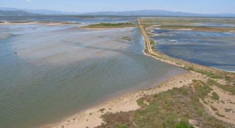 Punta de Banya, delta del Ebro (SEO/BirdLife).