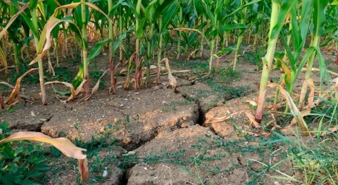Comisión Europea propone adelantar ayudas al sector agrícola ola sequía