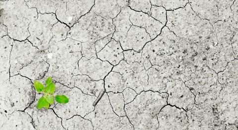 estrategias riego árboles podrían intensificar sequías