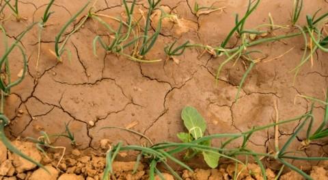 Crisis climática: división países pobres y ricos urgencia actuar