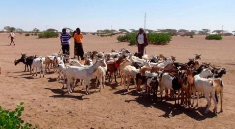 ganaderos afectados sequía Etiopía necesitan ayuda urgente