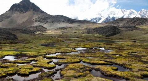 plantaciones pino empeoran efecto sequías Perú