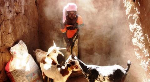 Suecia apoya agricultores y ganaderos afectados sequía Sahel