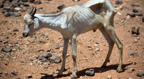 FAO aprueba 22 millones dólares paliar efectos sequía Somalia