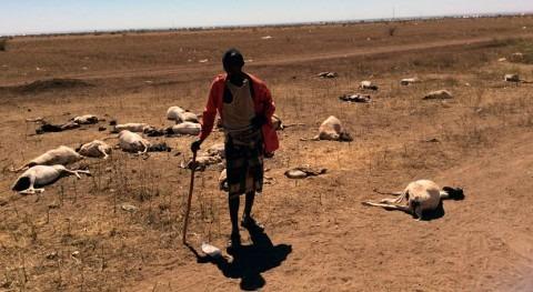 Somalia, al borde gran catástrofe debido sequía