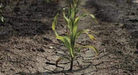 Reconstruyen últimos 600 años sequías y lluvias América Sur
