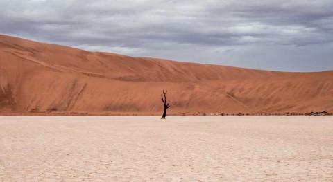 cambio climático provoca que condiciones calor y sequía se extiendan mundo