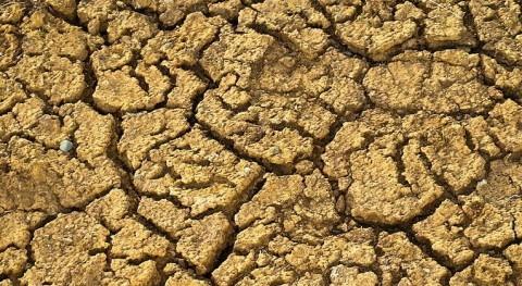 sequía Almería requiere medidas urgentes y excepcionales, Asaja