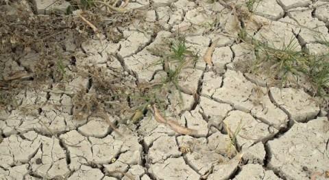 Regantes, universidad, patronal e instituciones Alicante se unen déficit hídrico