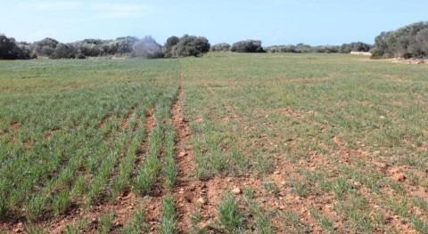 toma medidas urgentes sequía Baleares es necesidad