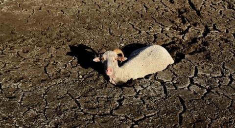 tesis Cátedra Aquae propone redefinir gestión sequía combatirla mejor