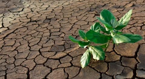 datos satélite subestiman impacto sequías vegetación