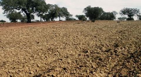 """medidas aprobadas MAGRAMA sequía son """"positivas"""", Asaja-Murcia"""