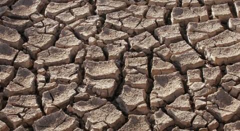 Baleares incrementa ayudas agrícolas y ganaderas hacer frente sequía